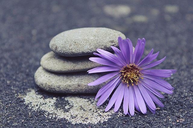 Galet et fleur