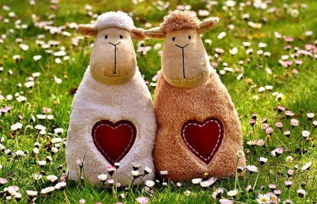 moutons amoureux